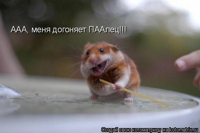 Котоматрица: ААА, меня догоняет ПААлец!!!