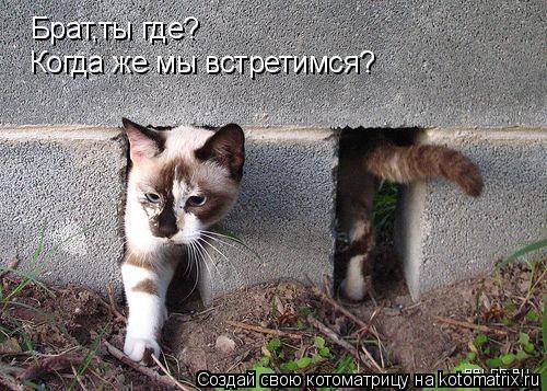 Котоматрица: Брат,ты где? Когда же мы встретимся?