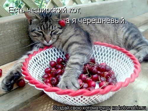 Котоматрица: Есть чеширский кот, а я черешневый.