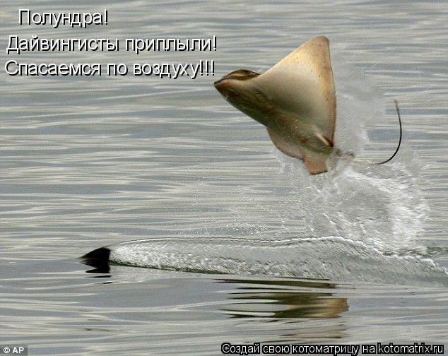 Котоматрица: Полундра! Спасаемся по воздуху!!! Дайвингисты приплыли!