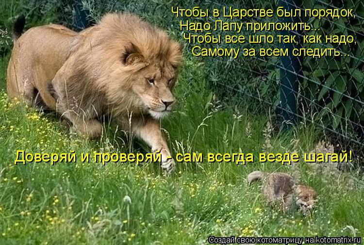 Котоматрица: Чтобы в Царстве был порядок, Надо Лапу приложить... Чтобы все шло так, как надо, Самому за всем следить... Доверяй и проверяй - сам всегда везде