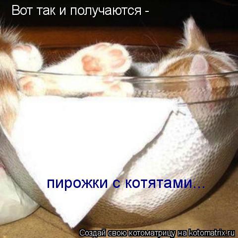Котоматрица: Вот так и получаются - пирожки с котятами...