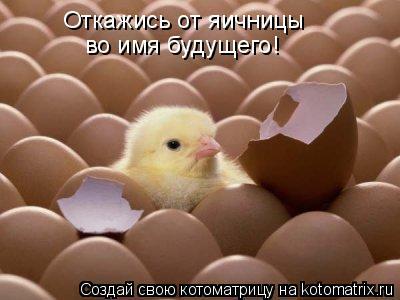 Котоматрица: Откажись от яичницы  во имя будущего!