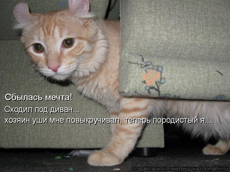 Котоматрица: Сходил под диван... хозяин уши мне повыкручивал,  теперь породистый я.... Сбылась мечта!