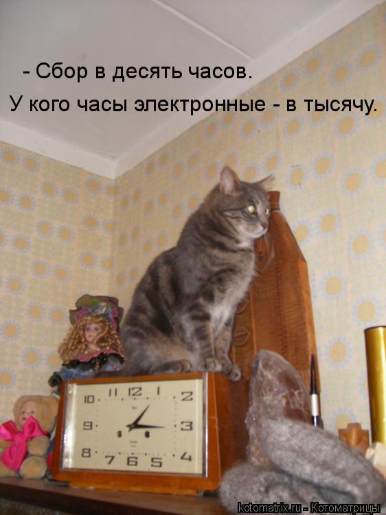Котоматрица: - Сбор в десять часов.  У кого часы электронные - в тысячу.