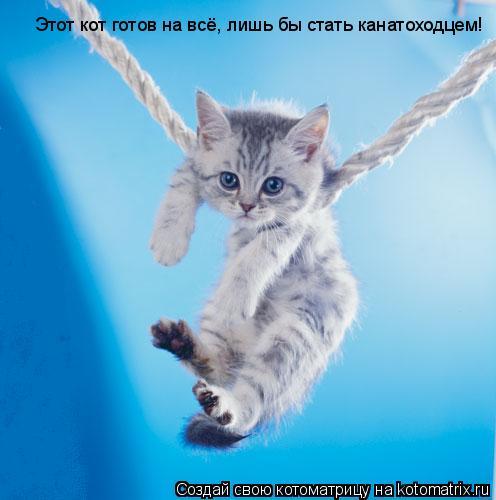 Котоматрица: Этот кот готов на всё, лишь бы стать канатоходцем!