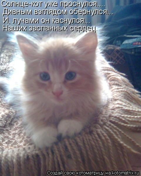 Котоматрица: Солнце-кот уже проснулся.... Дивным взглядом обернулся... И, лучами он каснулся... Наших заспанных сердец.
