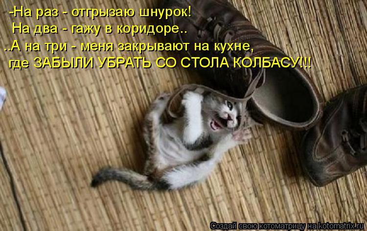 Котоматрица: -На раз - отгрызаю шнурок! На два - гажу в коридоре.. ..А на три - меня закрывают на кухне,  где ЗАБЫЛИ УБРАТЬ СО СТОЛА КОЛБАСУ!!!