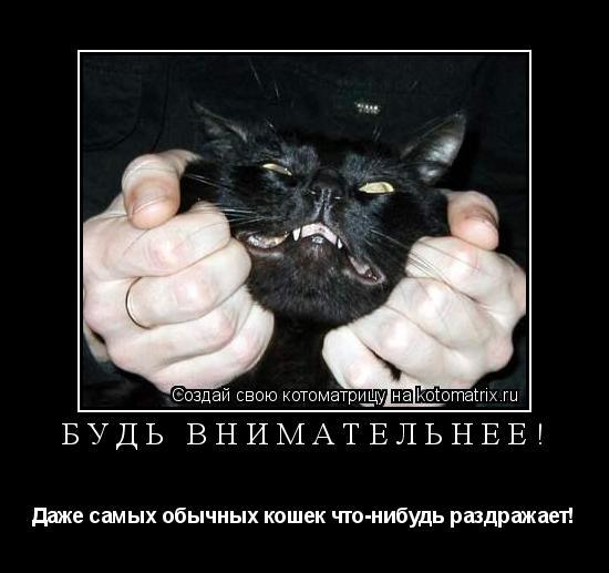 Котоматрица: Будь внимательнее! Даже самых обычных кошек что-нибудь раздражает!