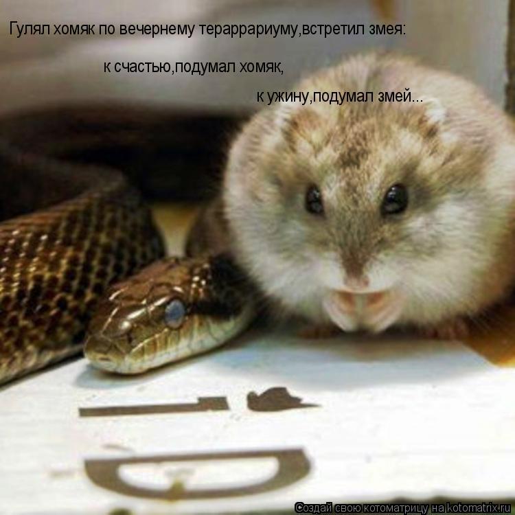 Котоматрица: Гулял хомяк по вечернему тераррариуму,встретил змея: к счастью,подумал хомяк, к ужину,подумал змей...