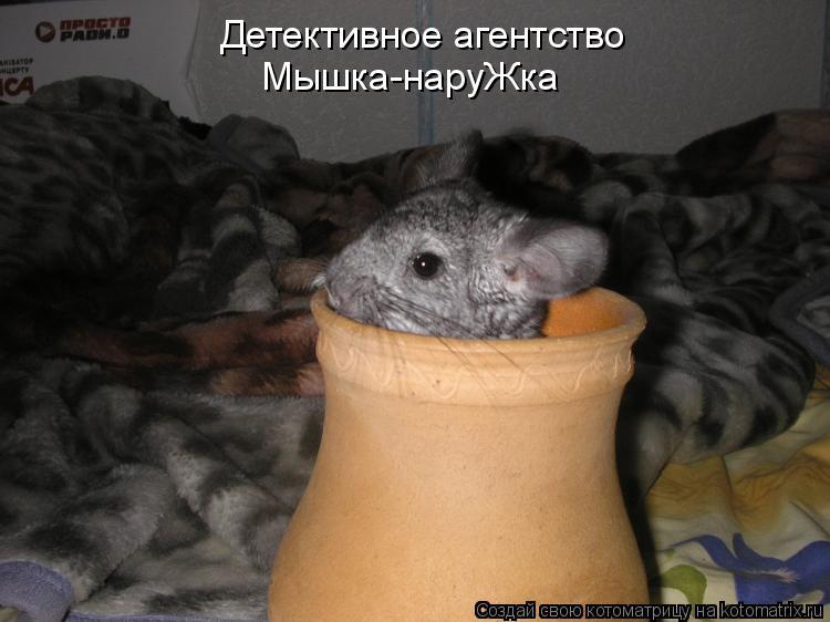 Котоматрица: Детективное агентство «Мышка-наруЖка»