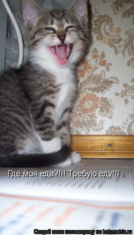 Котоматрица: Где моя еда?!!! Требую еду!!!