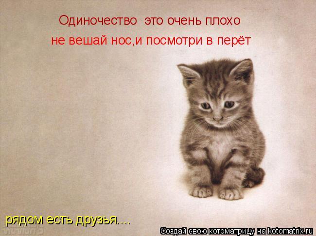 Котоматрица: Одиночество  это очень плохо не вешай нос,и посмотри в перёт рядом есть друзья....