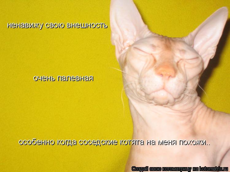 Котоматрица: особенно когда соседские котята на меня похожи.. ненавижу свою внешность очень палевная