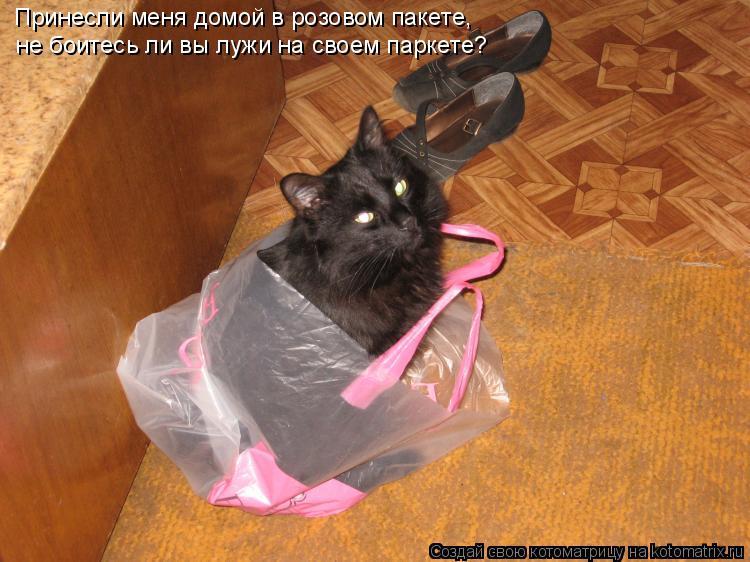 Котоматрица: Принесли меня домой в розовом пакете, не боитесь ли вы лужи на своем паркете?