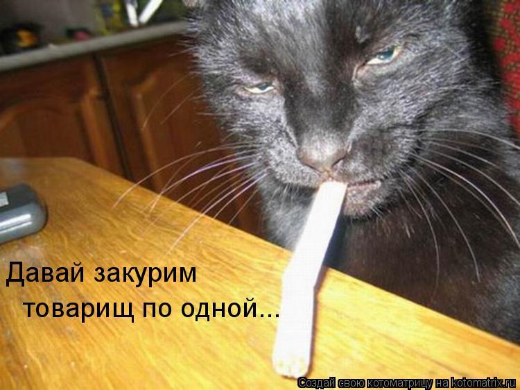 Котоматрица: товарищ по одной... Давай закурим
