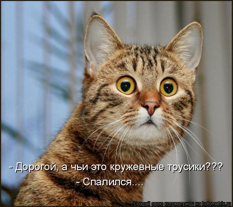 Котоматрица: - Дорогой, а чьи это кружевные трусики??? - Спалился....