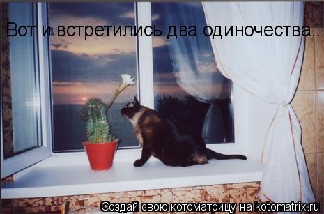 Котоматрица: Вот и встретились два одиночества..