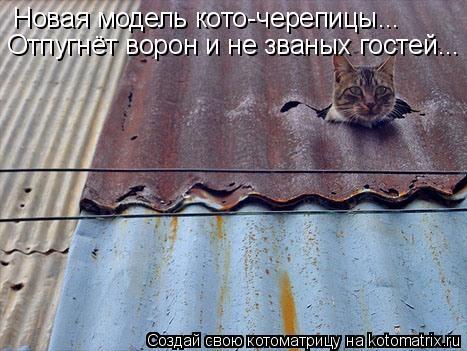 Котоматрица: Новая модель кото-черепицы... Отпугнёт ворон и не званых гостей...