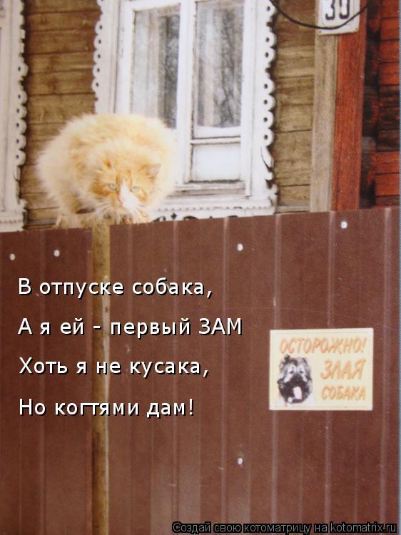 Котоматрица: В отпуске собака,  А я ей - первый ЗАМ Хоть я не кусака,  Но когтями дам!