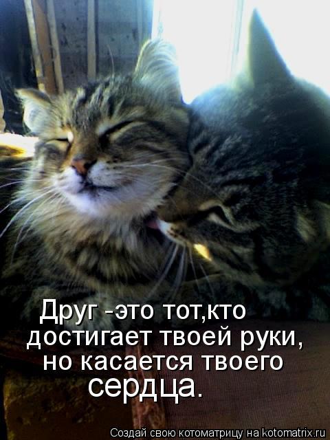 Котоматрица: Друг -это тот,кто  достигает твоей руки,   но касается твоего сердца.