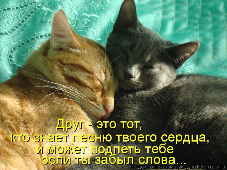 Котоматрица: кто знает песню твоего сердца, Друг - это тот,  и может подпеть тебе  эсли ты забыл слова...