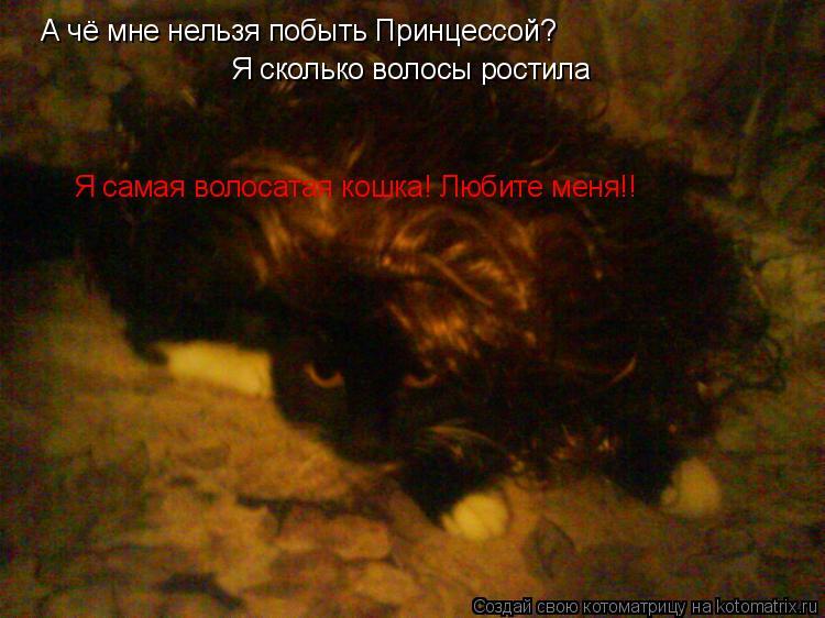 Котоматрица: А чё мне нельзя побыть Принцессой? Я сколько волосы ростила Я самая волосатая кошка! Любите меня!!