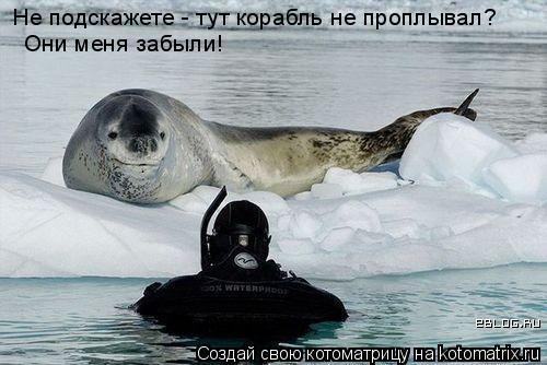 Котоматрица: Не подскажете - тут корабль не проплывал? Они меня забыли!