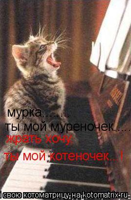 Котоматрица: мурка........ ты мой муреночек...... жрать хочу, ты мой котеночек...!