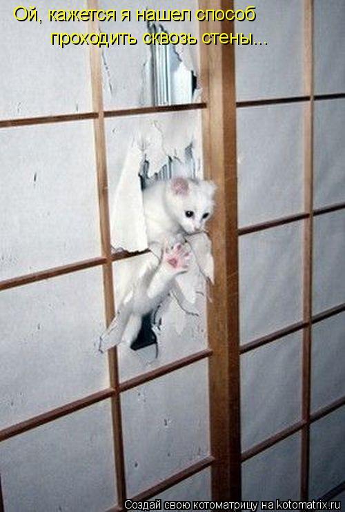 Котоматрица: Ой, кажется я нашел способ  проходить сквозь стены...