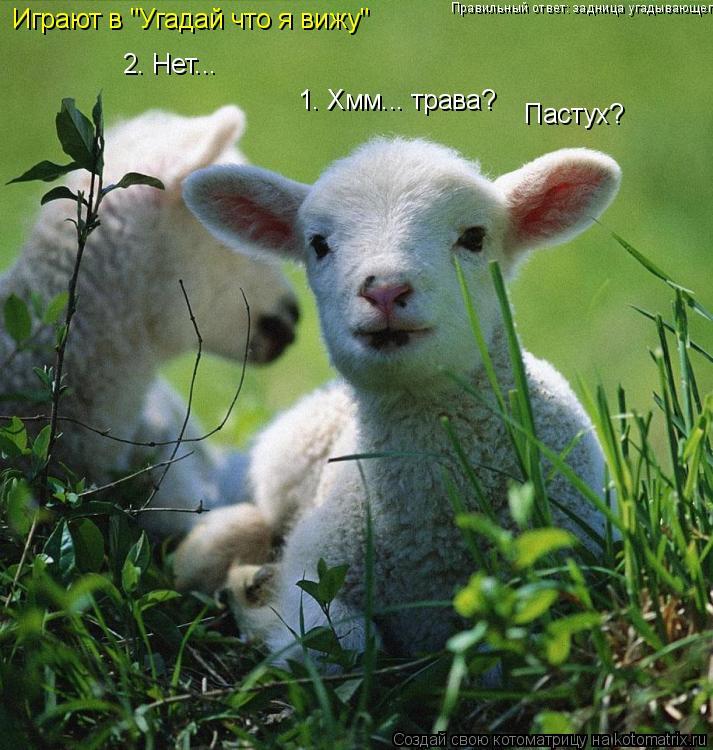 """Котоматрица: Играют в """"Угадай что я вижу"""" 1. Хмм... трава? 2. Нет... Пастух? Правильный ответ: задница угадывающего"""