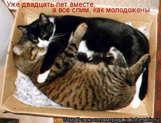 Котоматрица: Уже двадцать лет вместе,  а все спим, как молодожены...