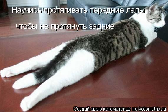 Котоматрица: Научись протягивать передние лапы чтобы не протянуть задние