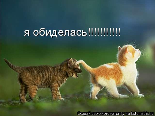 Котоматрица: я обиделась!!!!!!!!!!!