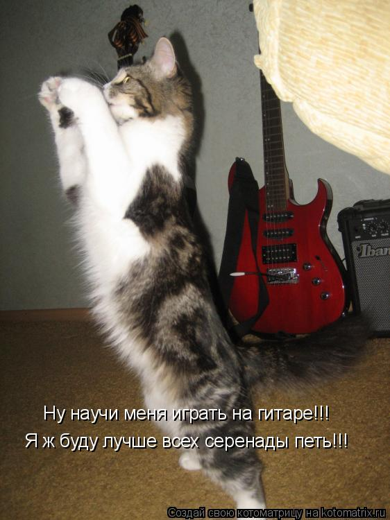 Котоматрица: Ну научи меня играть на гитаре!!! Я ж буду лучше всех серенады петь!!!