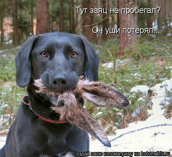 Котоматрица: Тут заяц не пробегал? Он уши потерял...