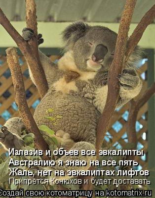 Котоматрица: Излазив и объев все эвкалипты Австралию я знаю на все пять Жаль, нет на эвкалиптах лифтов  Припрётся Конюхов и будет доставать