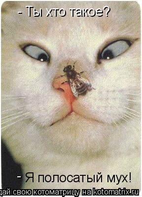 Котоматрица: - Ты хто такое? Я полосатый мух! -