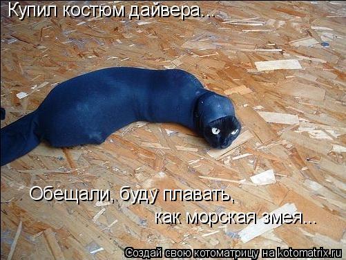 Котоматрица: Купил костюм дайвера... Обещали, буду плавать,  как морская змея...