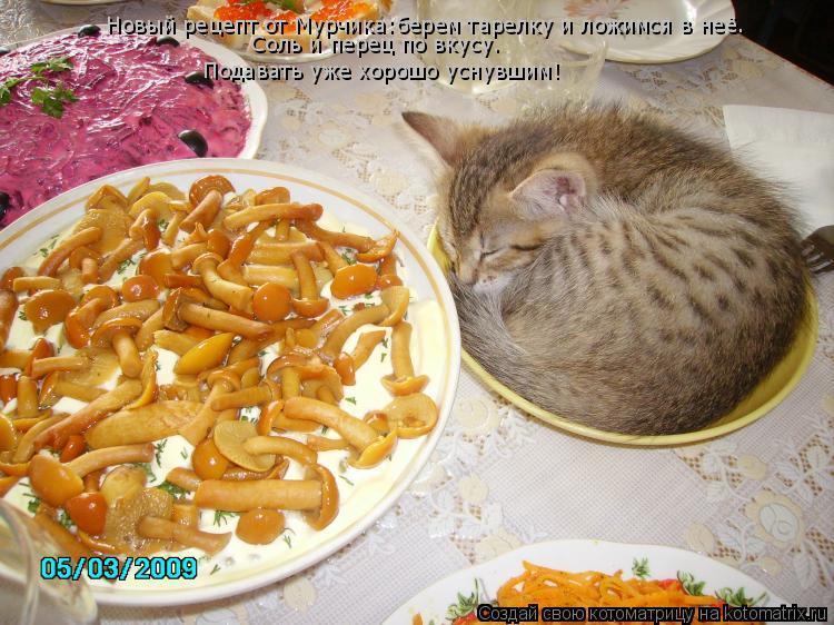 Котоматрица: Новый рецепт от Мурчика:берем тарелку и ложимся в неё. Подавать уже хорошо уснувшим! Соль и перец по вкусу.