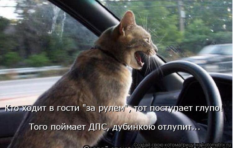 "Котоматрица: Кто ходит в гости ""за рулем"", тот поступает глупо! Того поймает ДПС, дубинкою отлупит..."