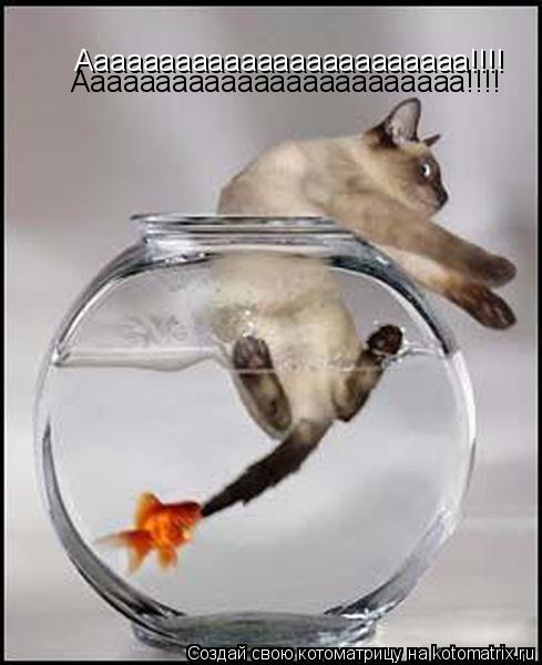 Котоматрица: Аааааааааааааааааааааааа!!!! Аааааааааааааааааааааааа!!!!