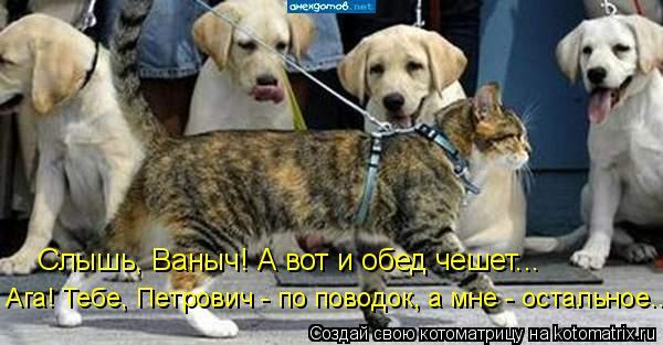 Котоматрица: Слышь, Ваныч! А вот и обед чешет... Ага! Тебе, Петрович - по поводок, а мне - остальное...