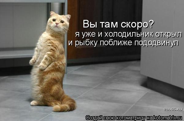 Котоматрица: Вы там скоро? я уже и холодильник открыл и рыбку поближе пододвинул