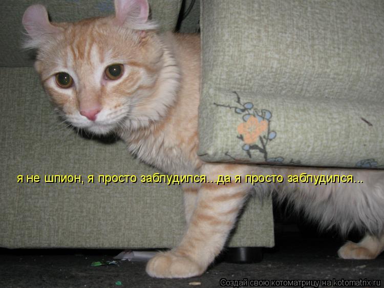Котоматрица: я не шпион я не шпион, я просто заблудился...да я просто заблудился...