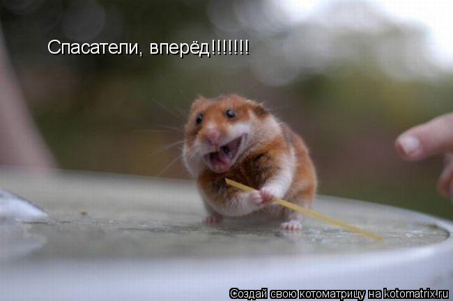 Котоматрица: Спасатели, вперёд!!!!!!!