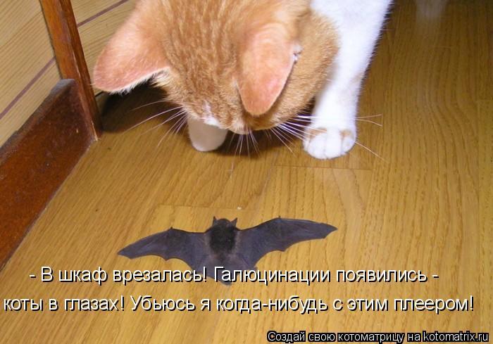 Котоматрица: - В шкаф врезалась! Галюцинации появились -  коты в глазах! Убьюсь я когда-нибудь с этим плеером!