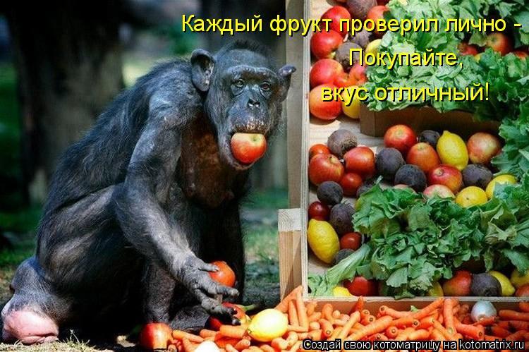 Котоматрица: Каждый фрукт проверил лично -  Покупайте, вкус отличный!