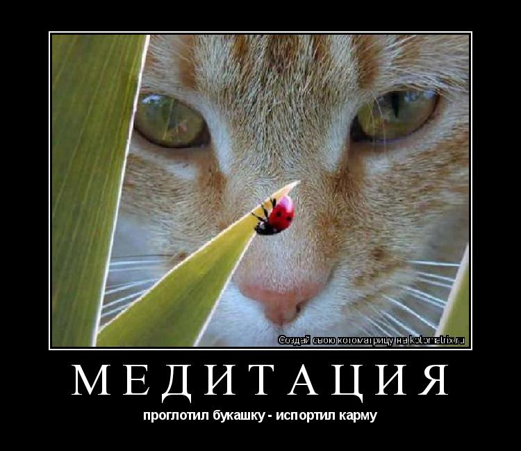 Котоматрица: Медитация проглотил букашку - испортил карму