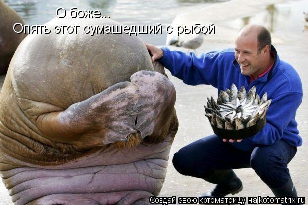 Котоматрица: О боже... Опять этот сумашедший с рыбой